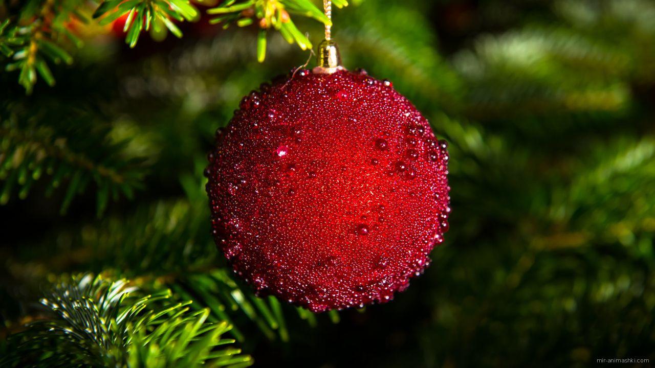 Рождественская игрушка - C Рождеством Христовым поздравительные картинки