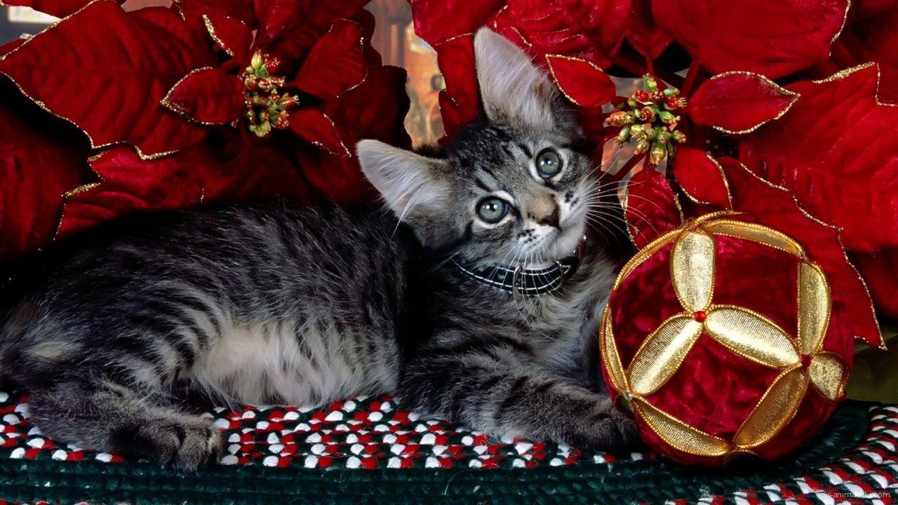Серый котёнок на рождество - C Рождеством Христовым поздравительные картинки