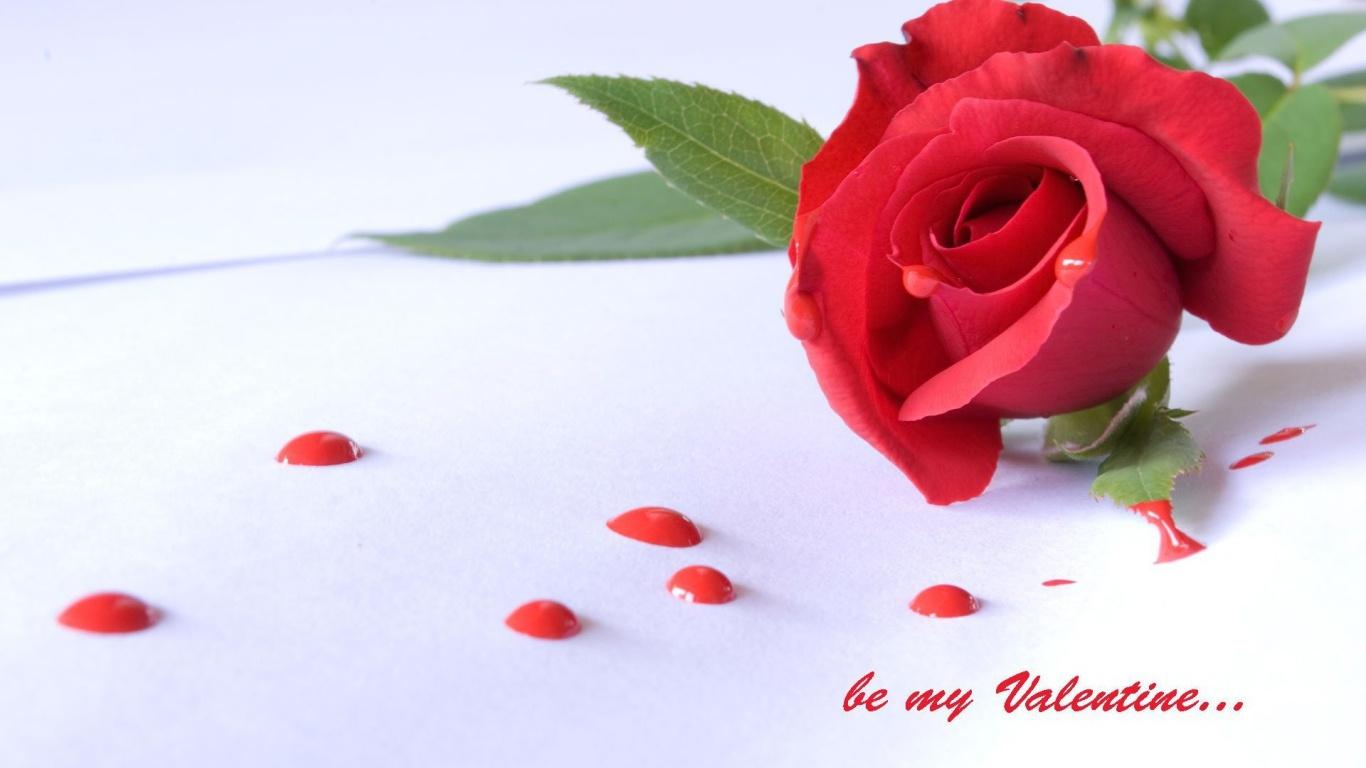 Роза и капли на День Святого Валентина 14 февраля - С днем Святого Валентина поздравительные картинки