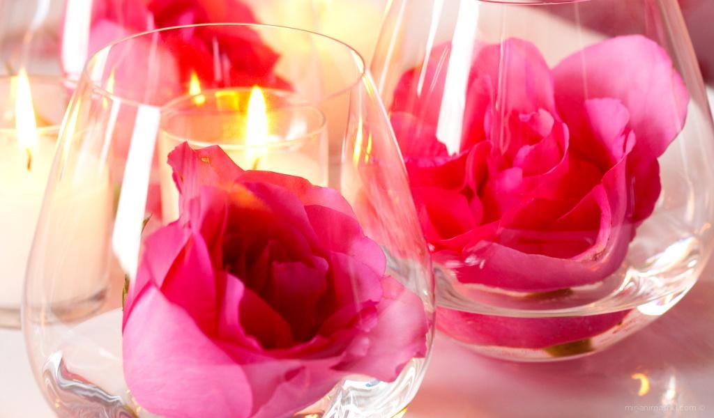 Роза в бокале на День Святого Валентина - С днем Святого Валентина поздравительные картинки