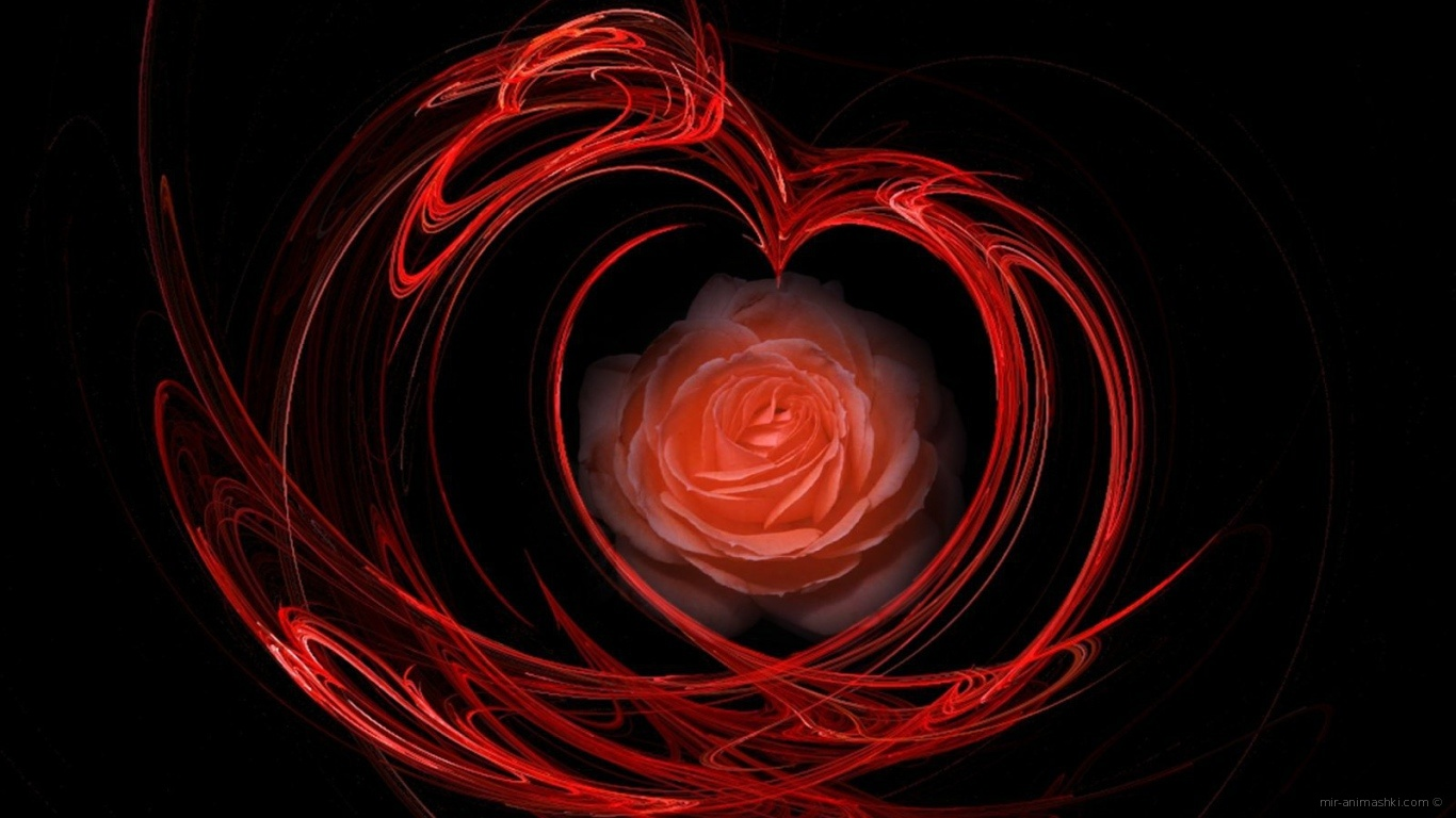 Огненная роза на День Святого Валентина 14 февраля - С днем Святого Валентина поздравительные картинки