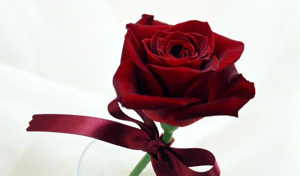 Чудесная роза на День Святого Валентина - С днем Святого Валентина поздравительные картинки