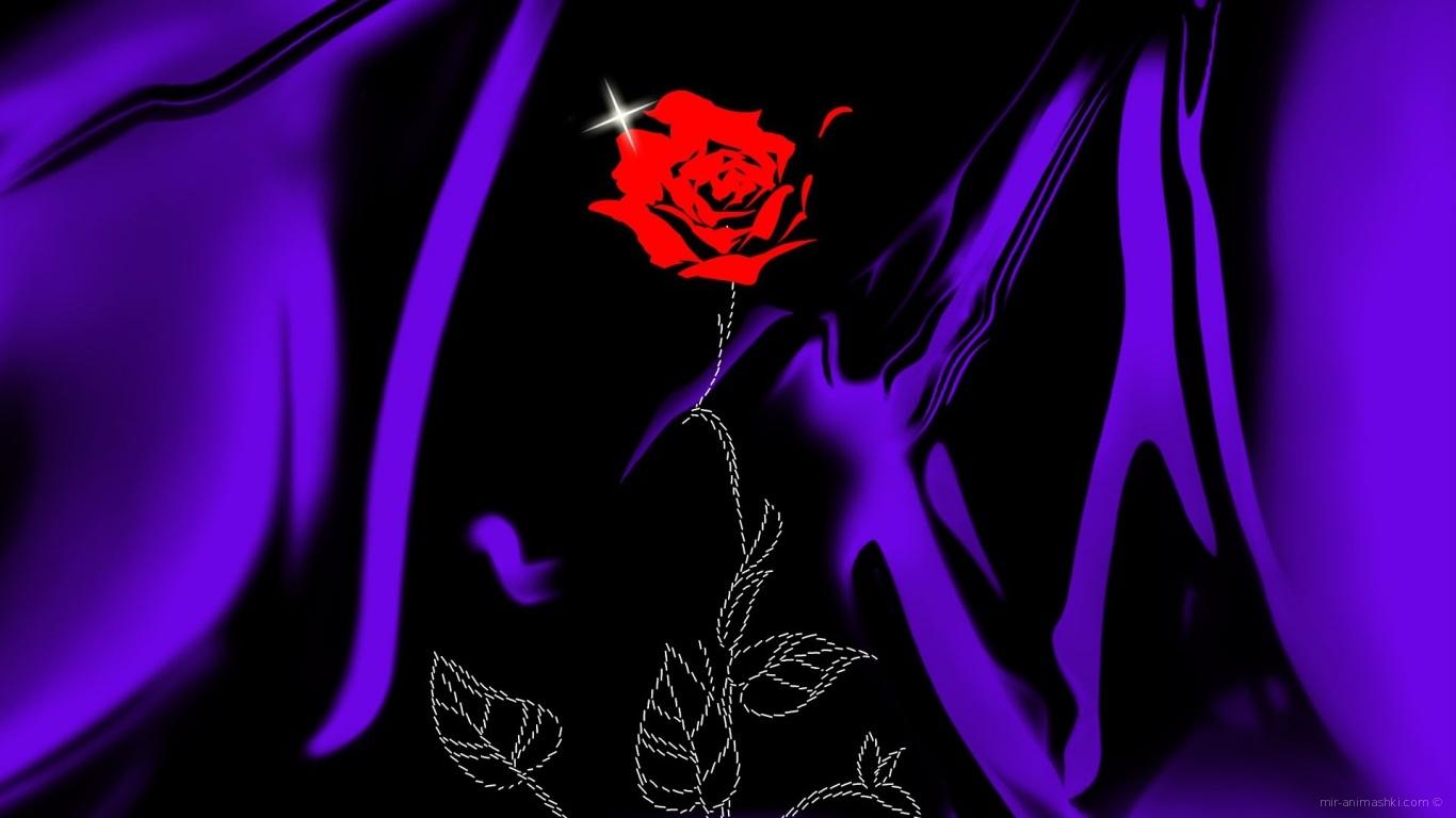 Роза на сиреневой ткани на День Святого Валентина - С днем Святого Валентина поздравительные картинки