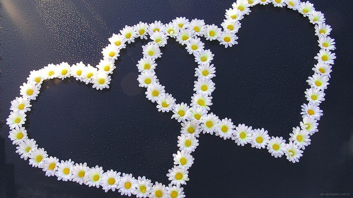 Сердца из ромашек на День Святого Валентина - С днем Святого Валентина поздравительные картинки