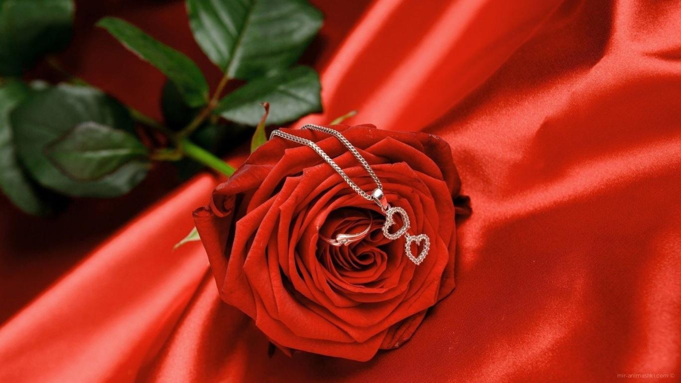 Роза с кулоном на День Святого Валентина - С днем Святого Валентина поздравительные картинки