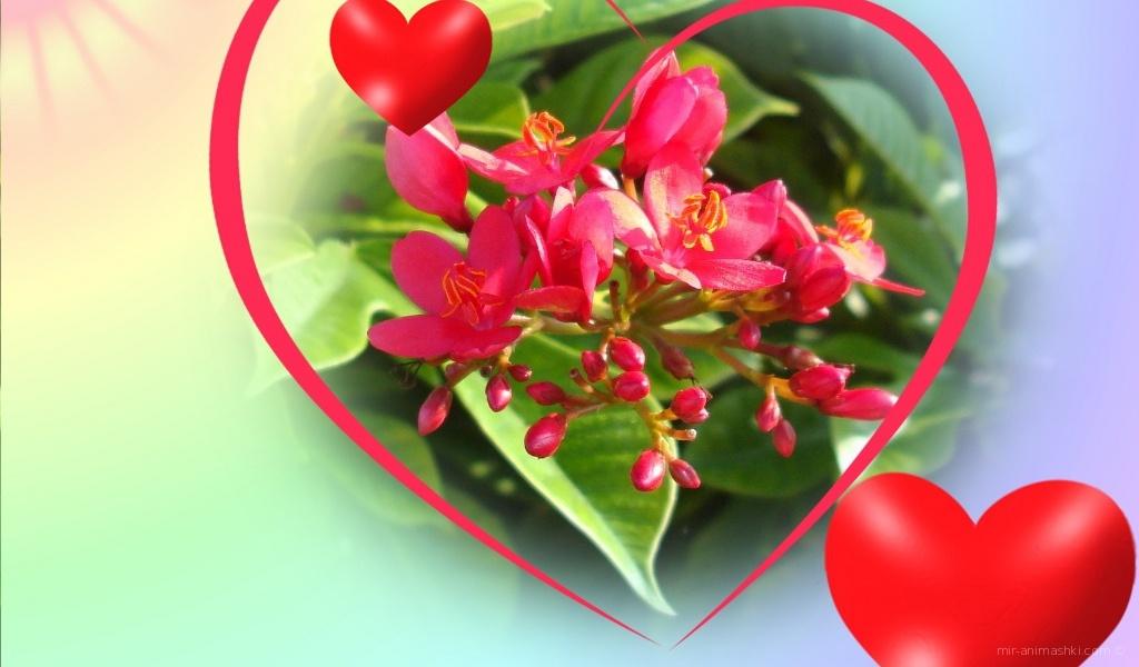 Великолепные цветы на День Святого Валентина - С днем Святого Валентина поздравительные картинки