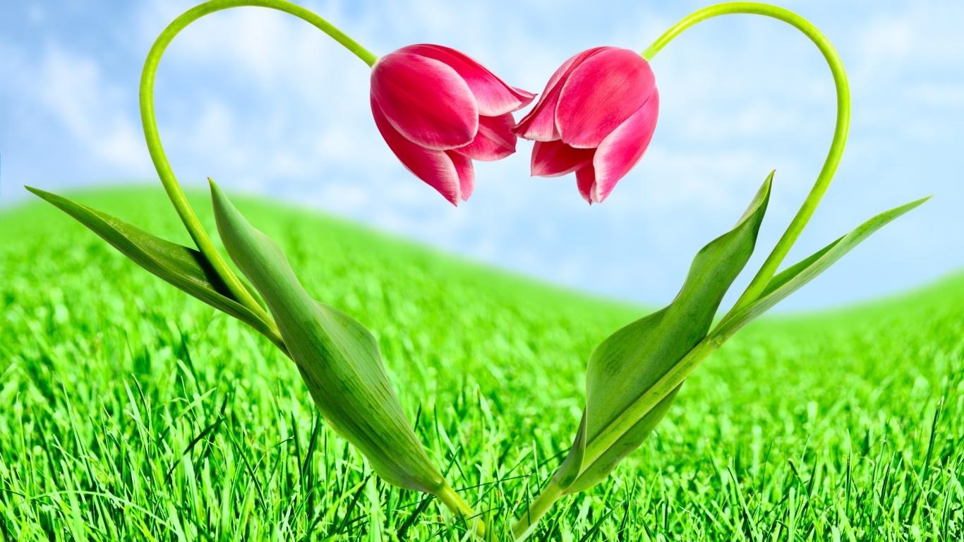 Тюльпаны на День Святого Валентина - С днем Святого Валентина поздравительные картинки