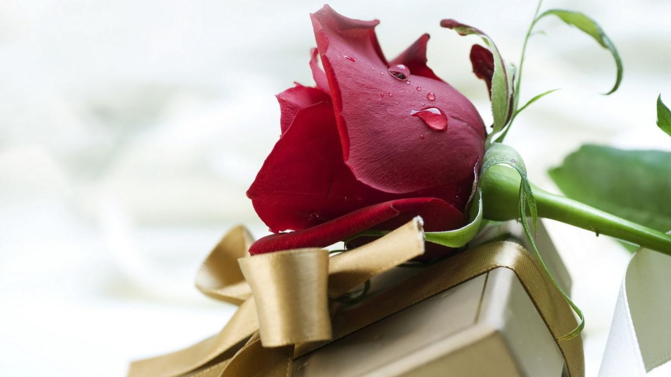 Роза и подарок на День Святого Валентина - С днем Святого Валентина поздравительные картинки