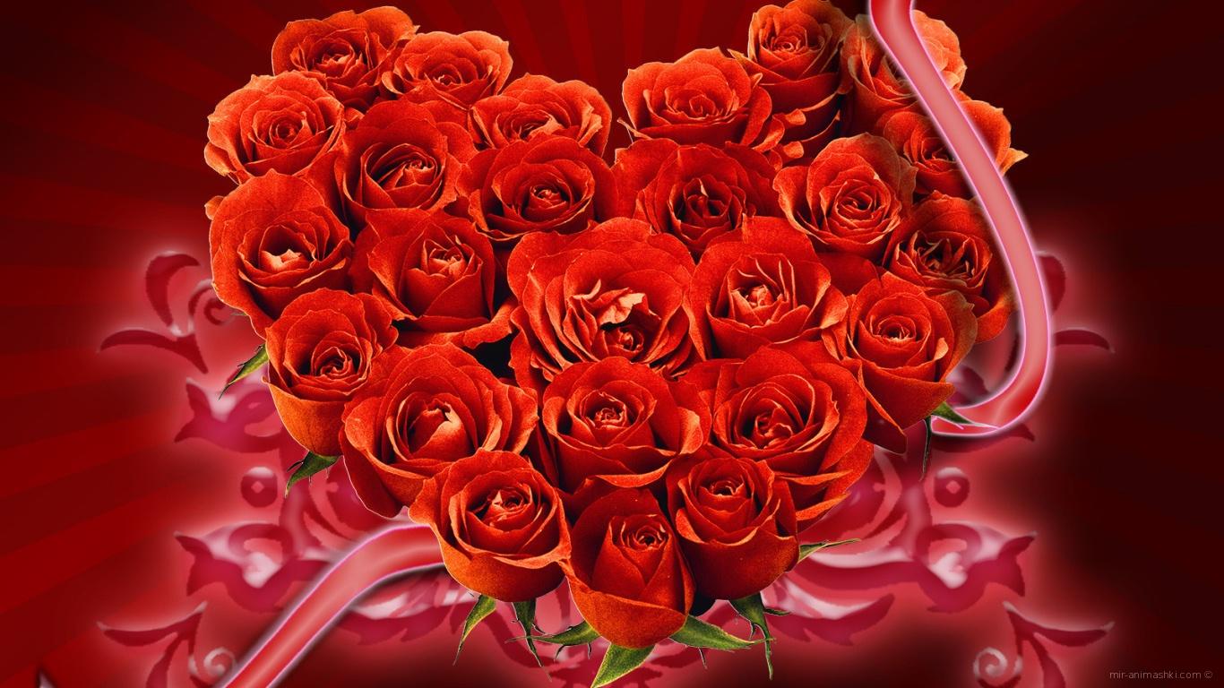 Букет красных роз на День Святого Валентина - С днем Святого Валентина поздравительные картинки