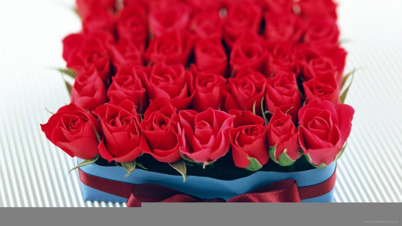 Бутоны роз в День Св. Валентина - С днем Святого Валентина поздравительные картинки