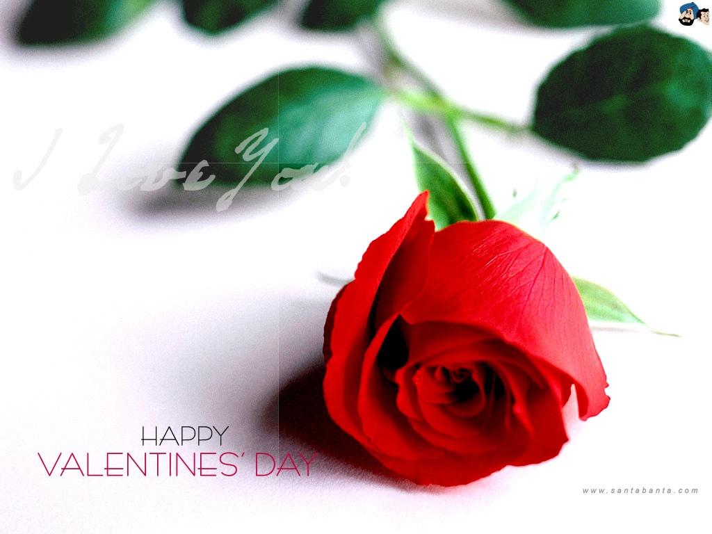 Роза в подарок на День святого Валентина - С днем Святого Валентина поздравительные картинки