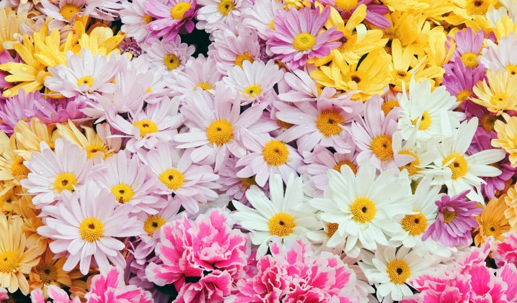 Цветы дорогим женщинам - C 8 марта поздравительные картинки