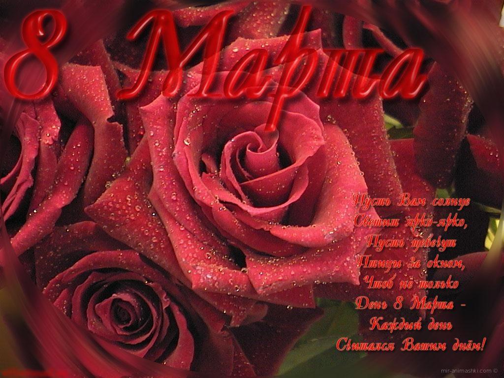 Красная роза Март 8 - C 8 марта поздравительные картинки