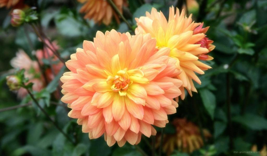 Приятный цветок на 8 марта - C 8 марта поздравительные картинки