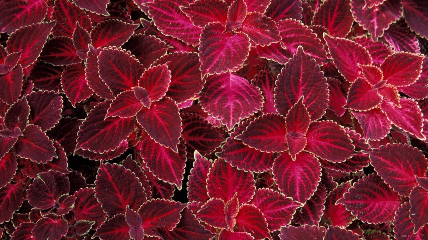 Лепестки цветов на 8 марта - C 8 марта поздравительные картинки