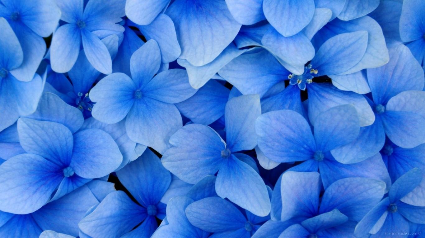 Голубые цветы в подарок на 8 марта - C 8 марта поздравительные картинки