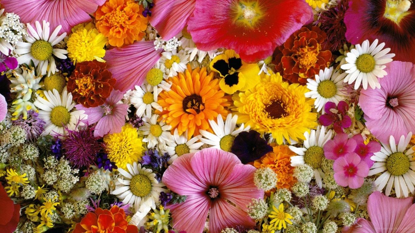 Цветочки для любимой дочки - C 8 марта поздравительные картинки