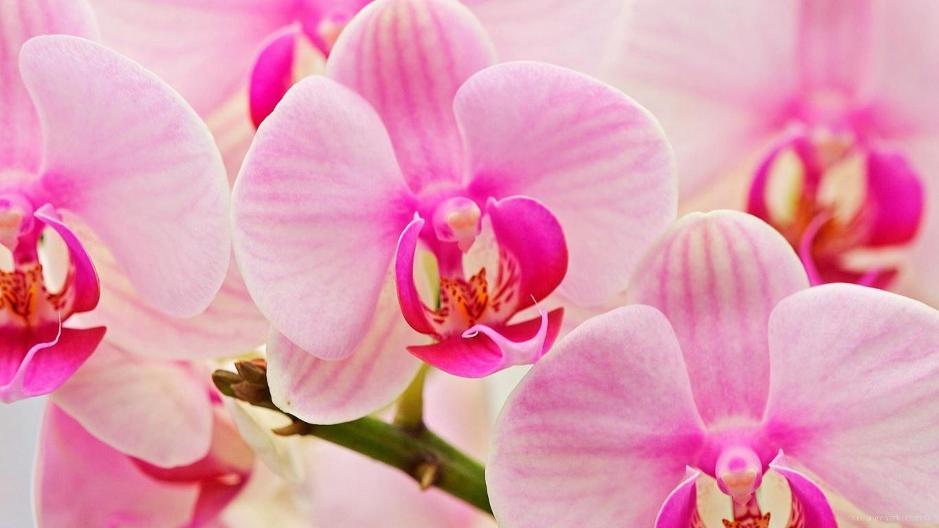 Цветы любимым женщинам - C 8 марта поздравительные картинки