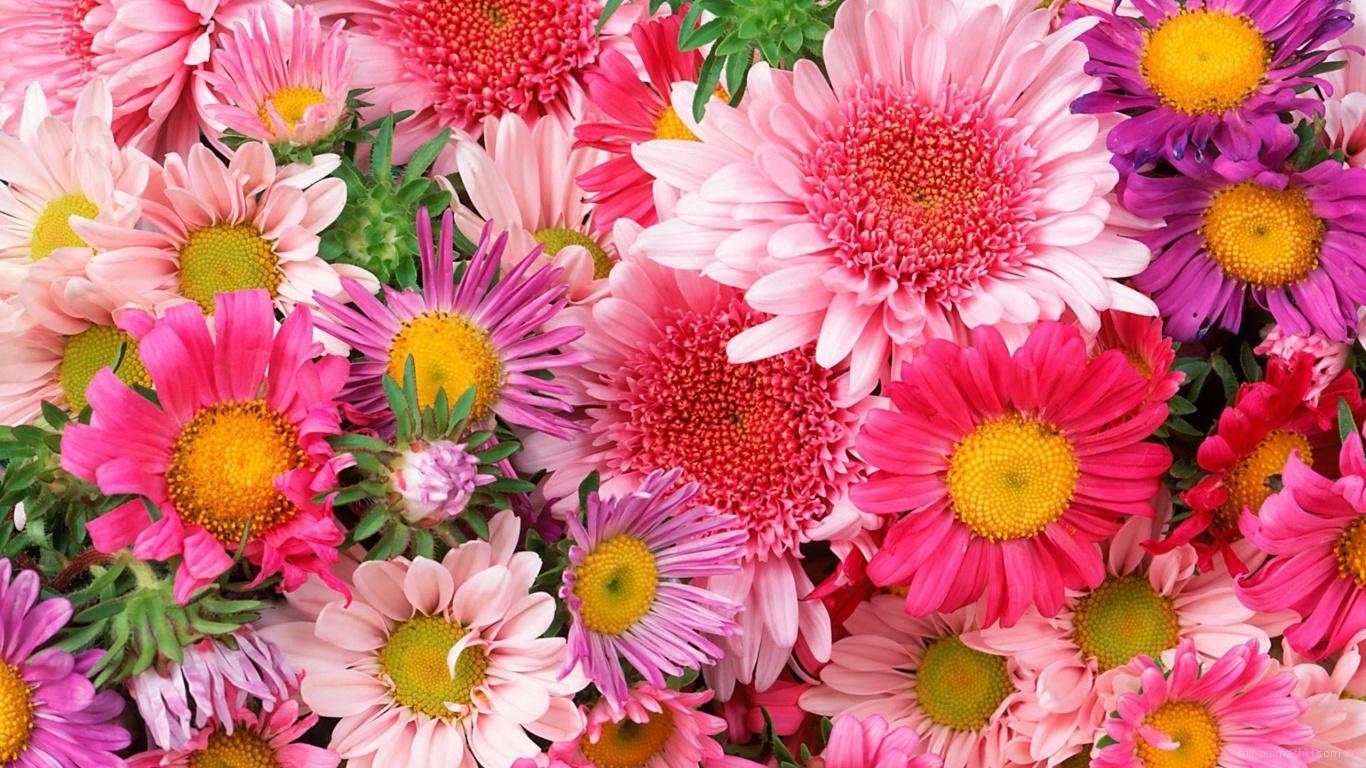 Красивые цветы на 8 марта - C 8 марта поздравительные картинки