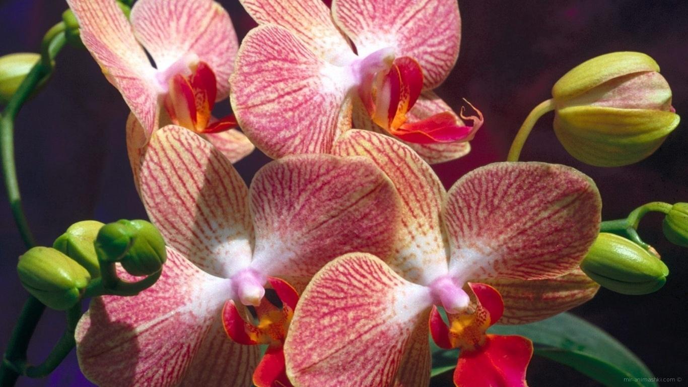 Экзотические цветы на 8 марта - C 8 марта поздравительные картинки
