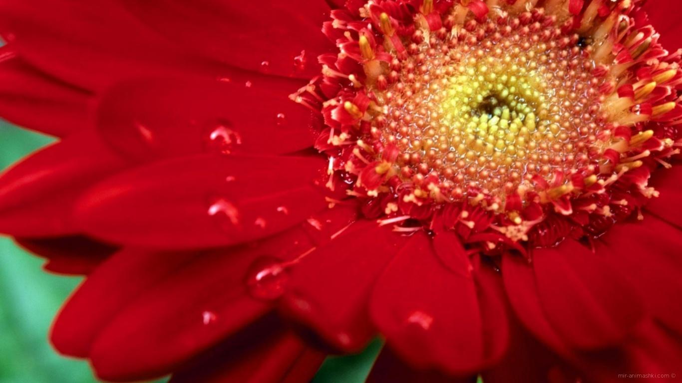 Цветок на международный женский день - C 8 марта поздравительные картинки