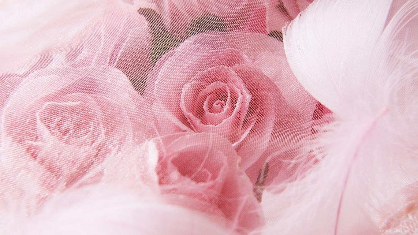 Именины, открытки для фона на 8 марта с розой