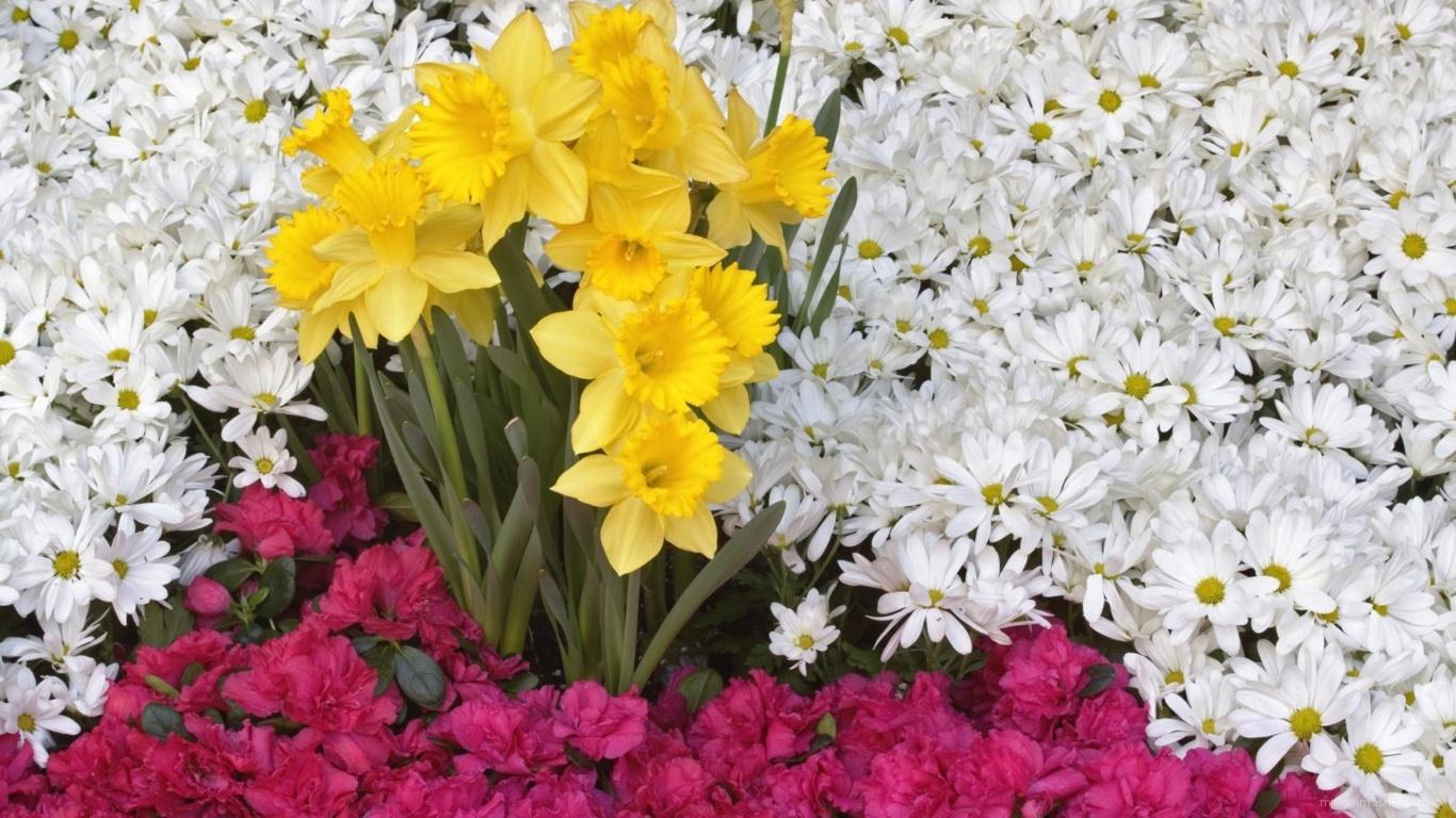 Приятные цветы красивым женщинам - C 8 марта поздравительные картинки