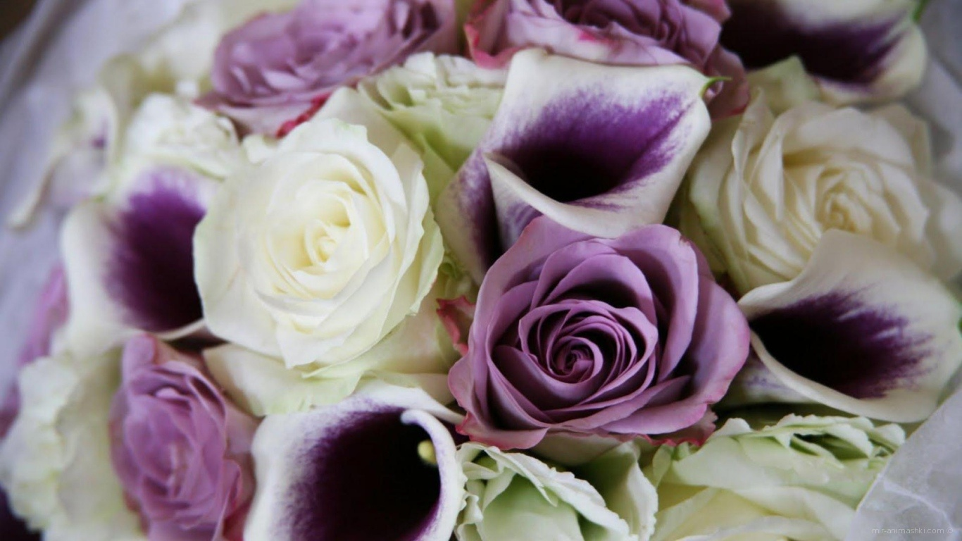 Фиолетовые розы в красивом букете на восьмое марта - C 8 марта поздравительные картинки