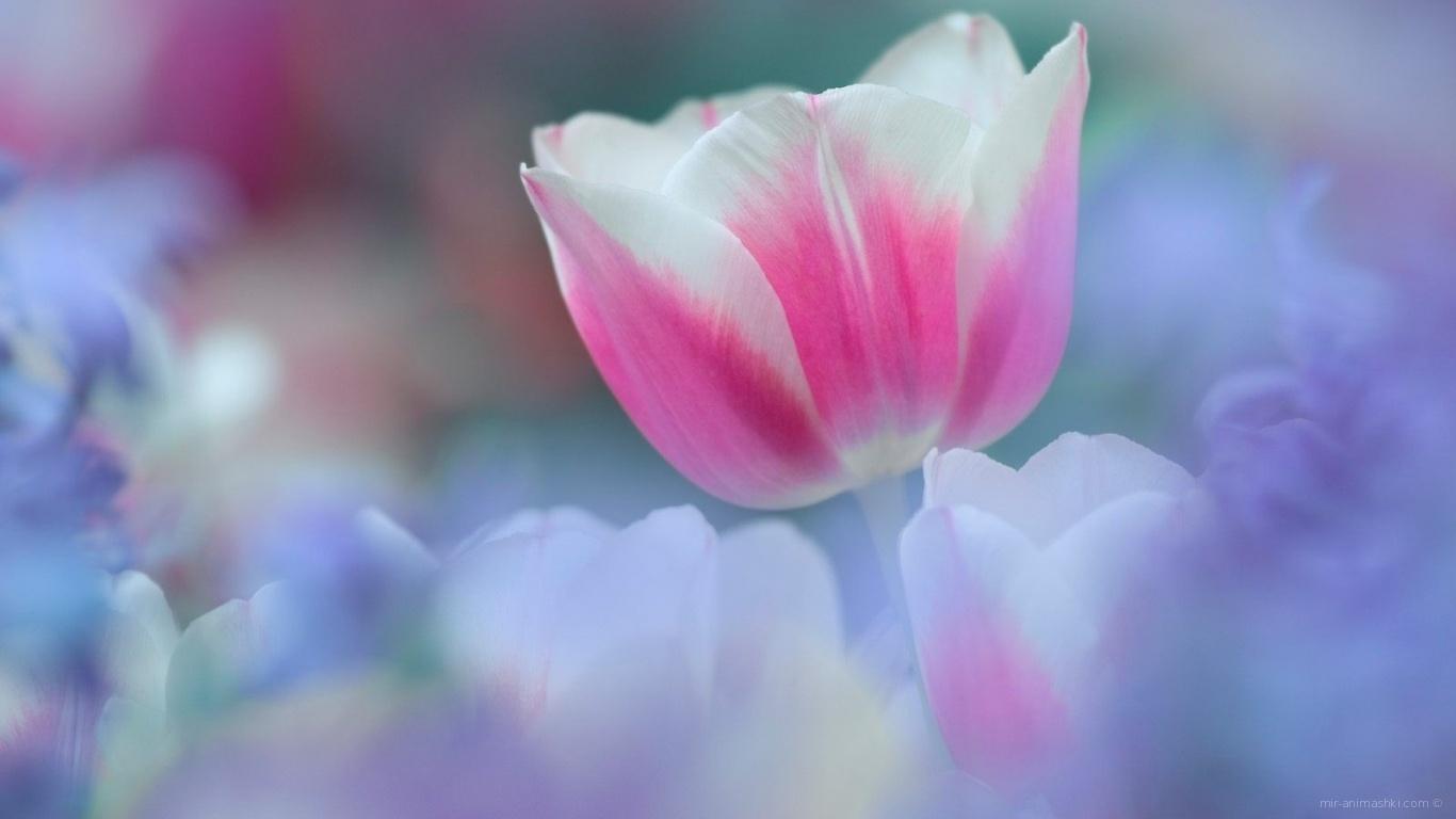 8 марта Цветок - C 8 марта поздравительные картинки