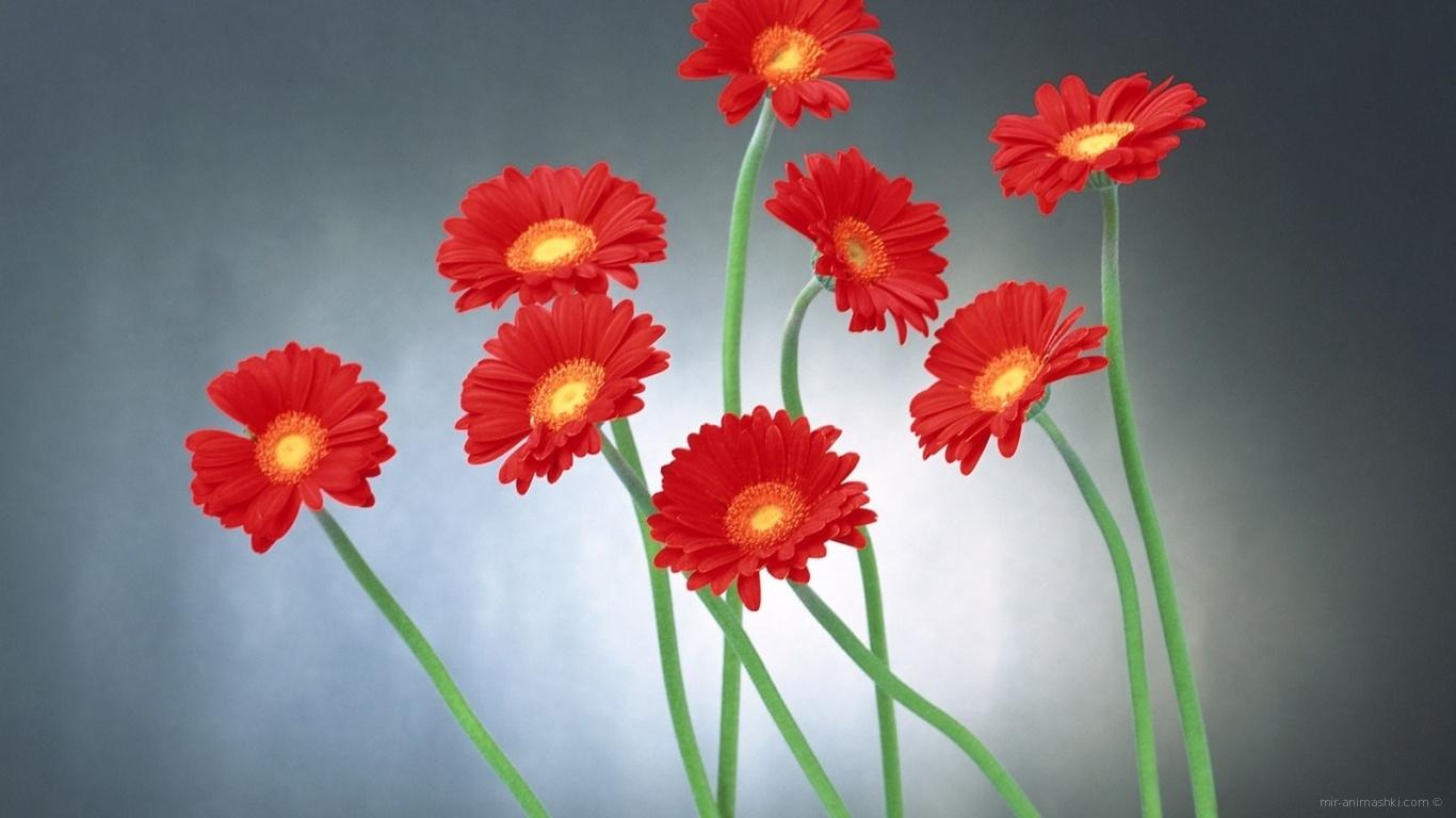 Прикольные цветы на 8 марта - C 8 марта поздравительные картинки