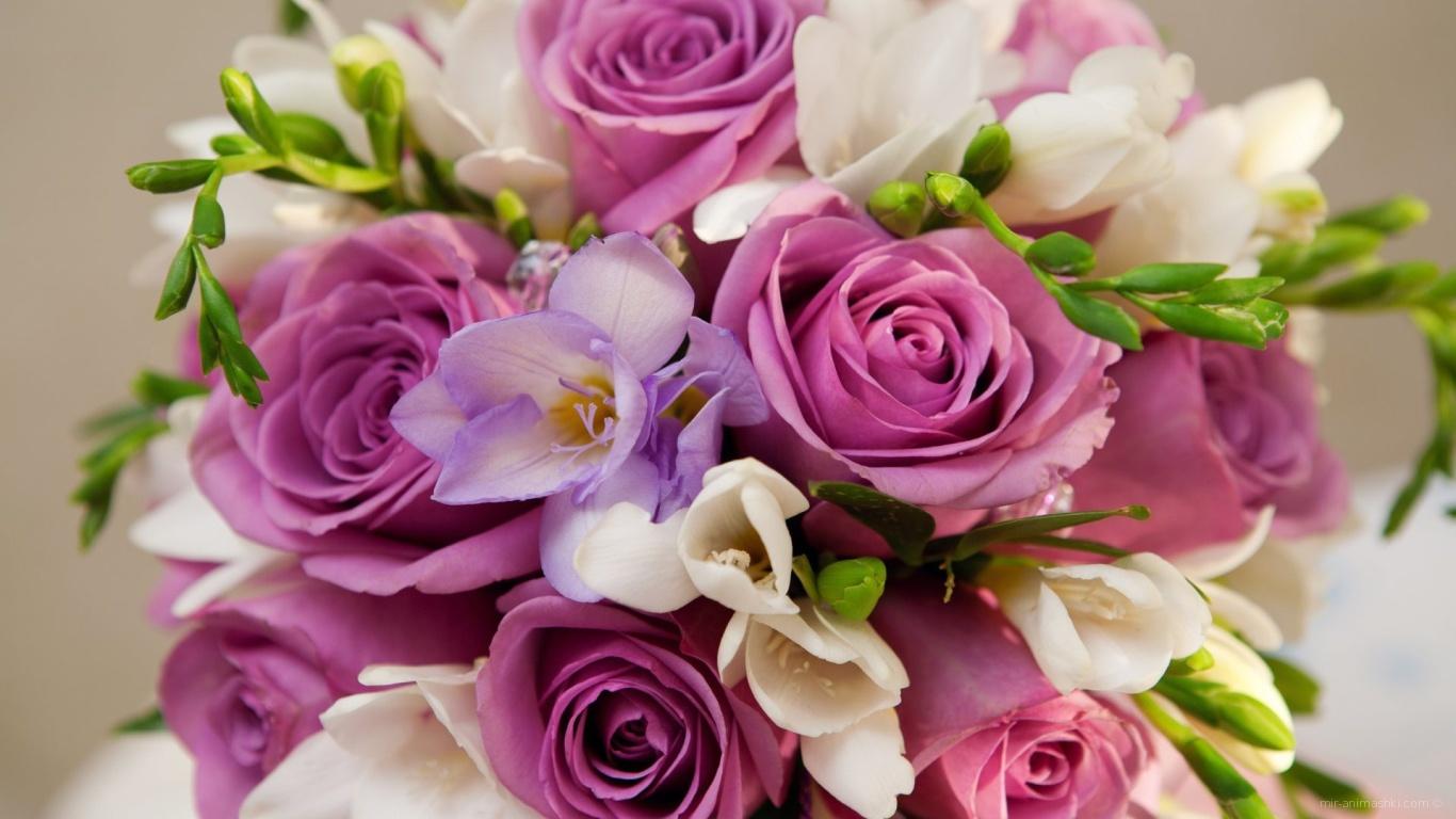 Фиолетовые розы в букете для женщин на 8 марта - C 8 марта поздравительные картинки