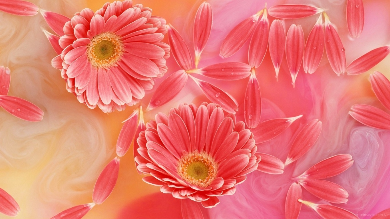 Любимый праздник женщин - C 8 марта поздравительные картинки