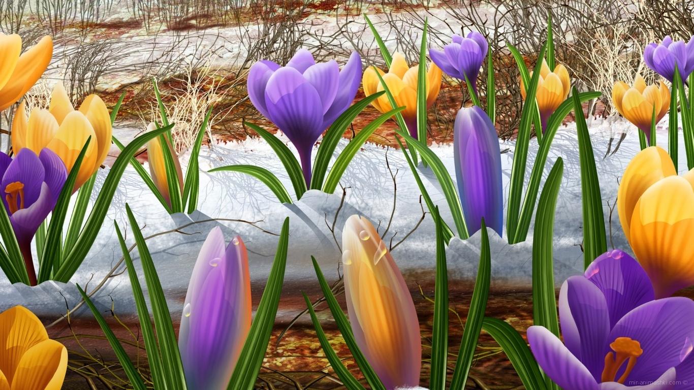 Подснежники на 8 марта - C 8 марта поздравительные картинки