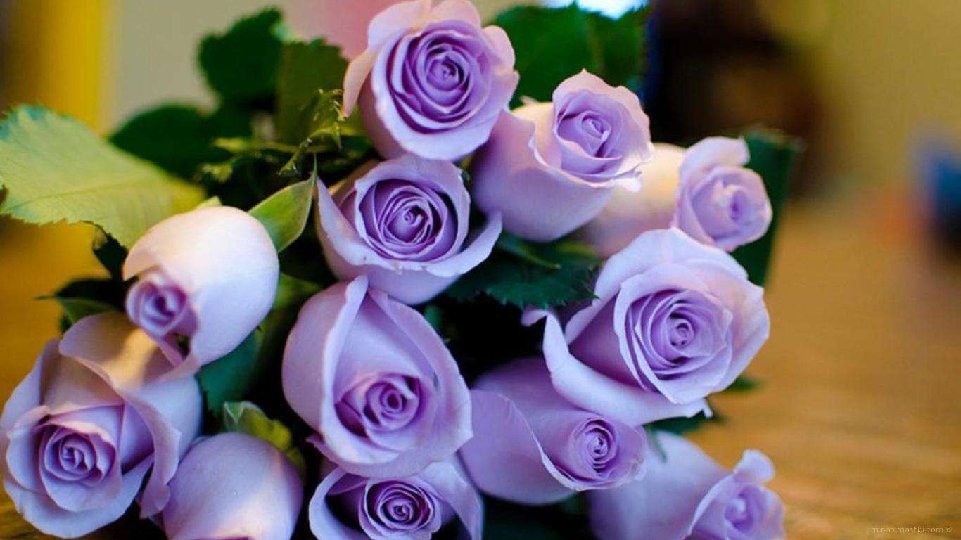 Фиолетовые розы в букете на восьмое марта - C 8 марта поздравительные картинки
