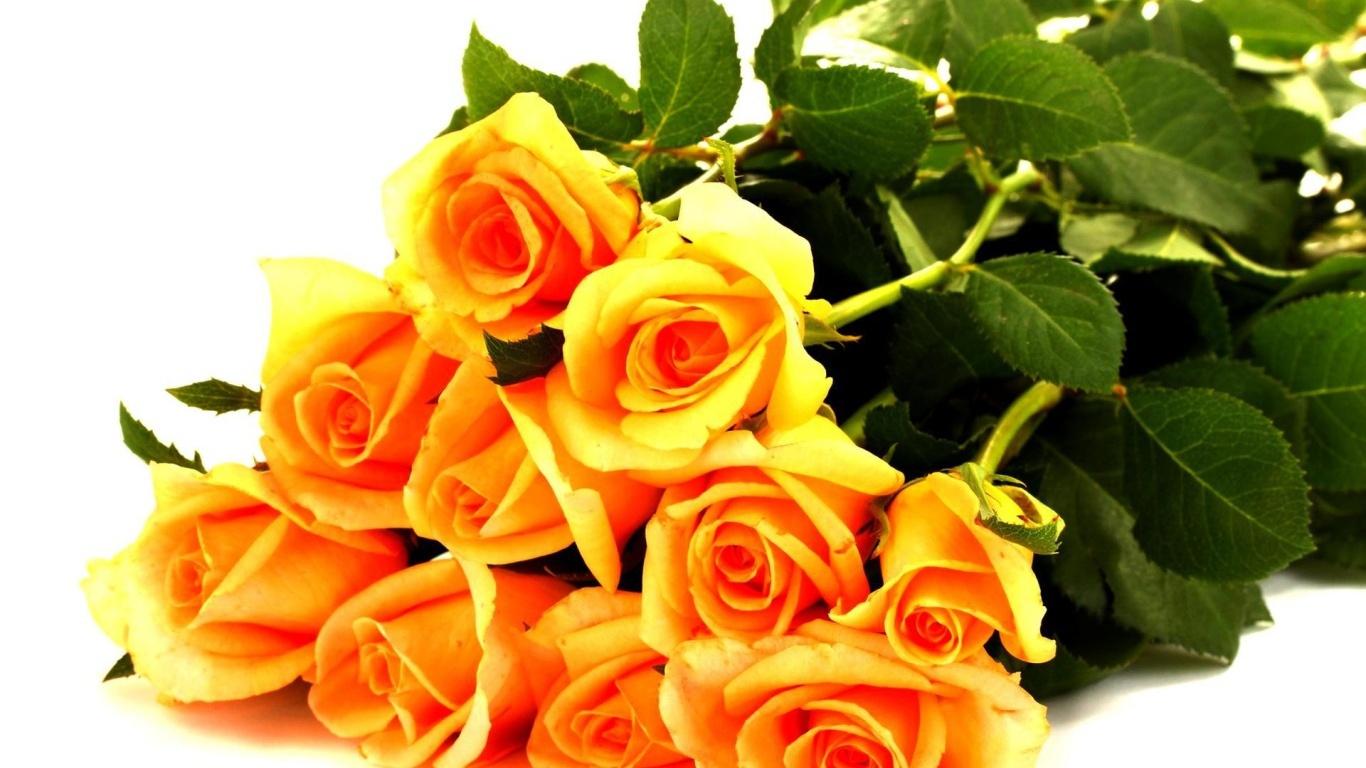 Жёлтые розы в букете для любимой дамы - C 8 марта поздравительные картинки