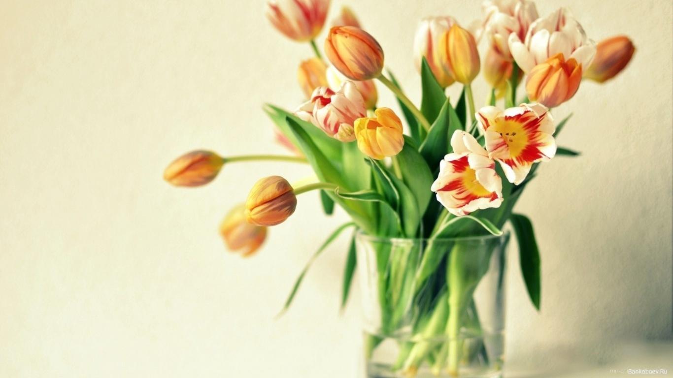 Жёлтые тюльпаны в подарок на восьмое марта - C 8 марта поздравительные картинки