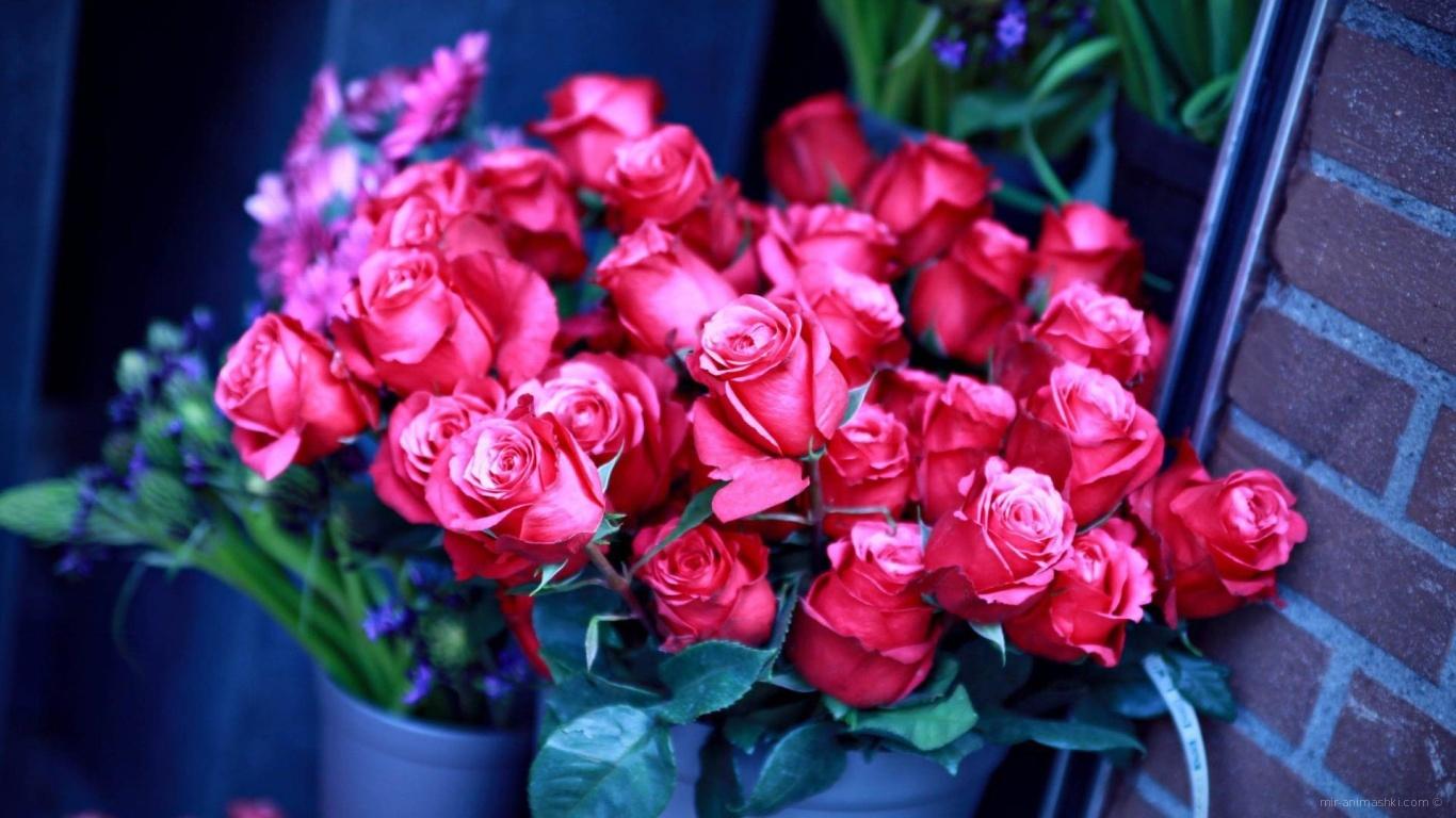 Красивые букеты из роз девушкам на 8 марта - C 8 марта поздравительные картинки