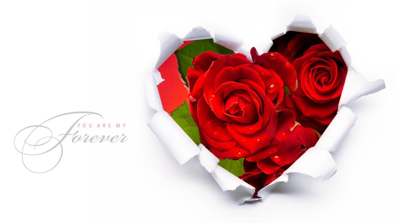 Красивые красные розы на 8 марта - C 8 марта поздравительные картинки