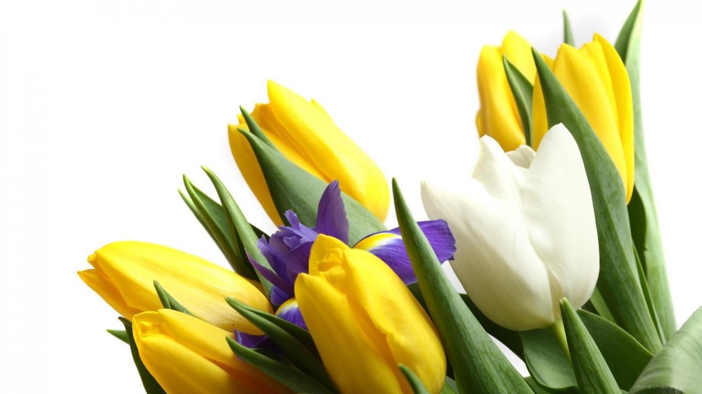 Цветы для девушки к 8 марта - C 8 марта поздравительные картинки