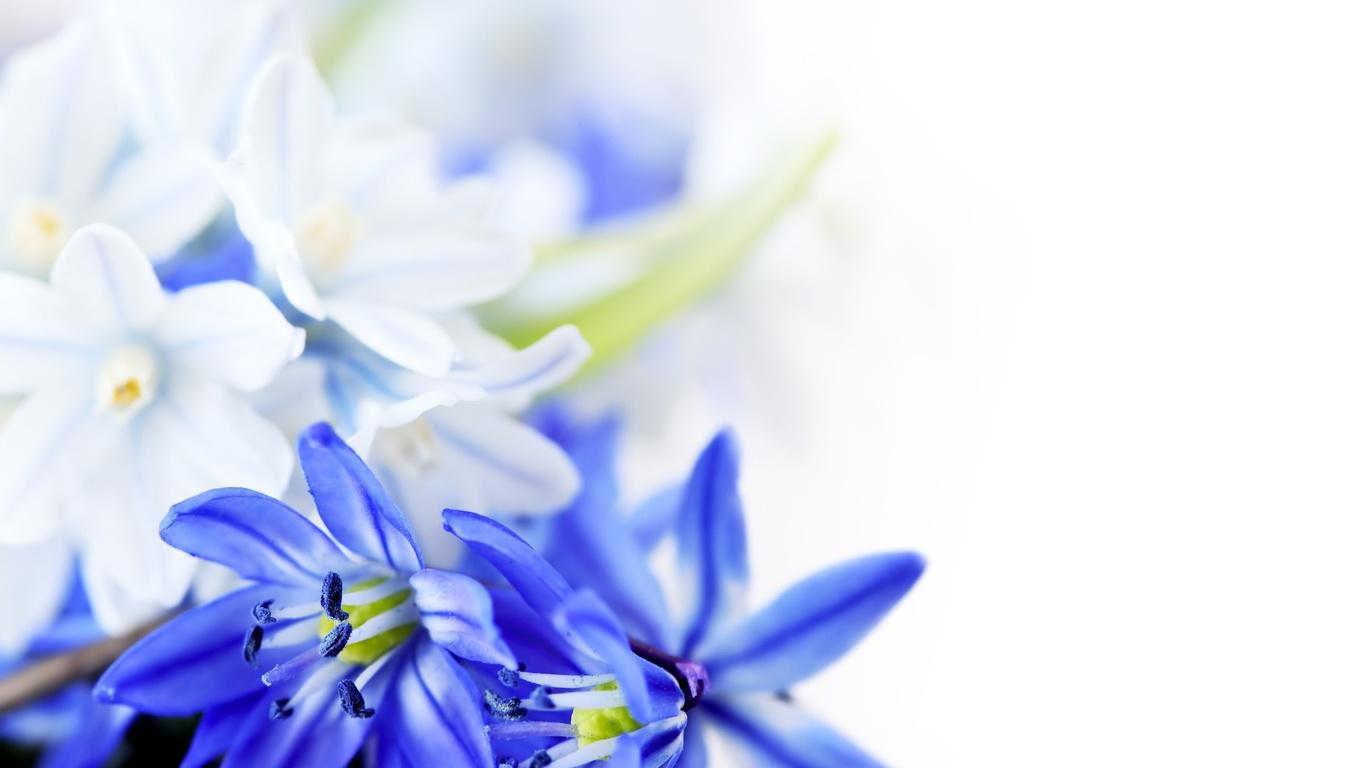 Великолепные цветы на 8 марта - C 8 марта поздравительные картинки