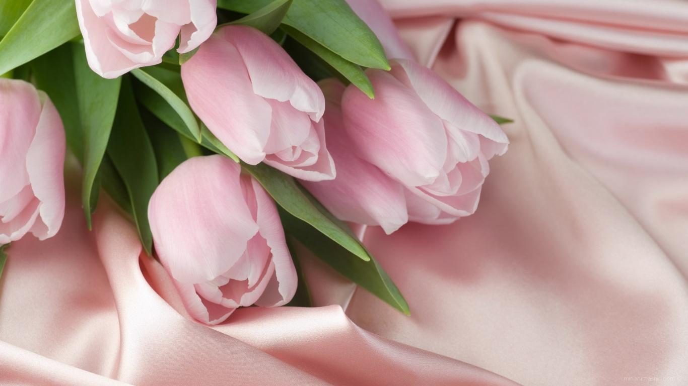 Тюльпаны и шелк на 8 марта - C 8 марта поздравительные картинки