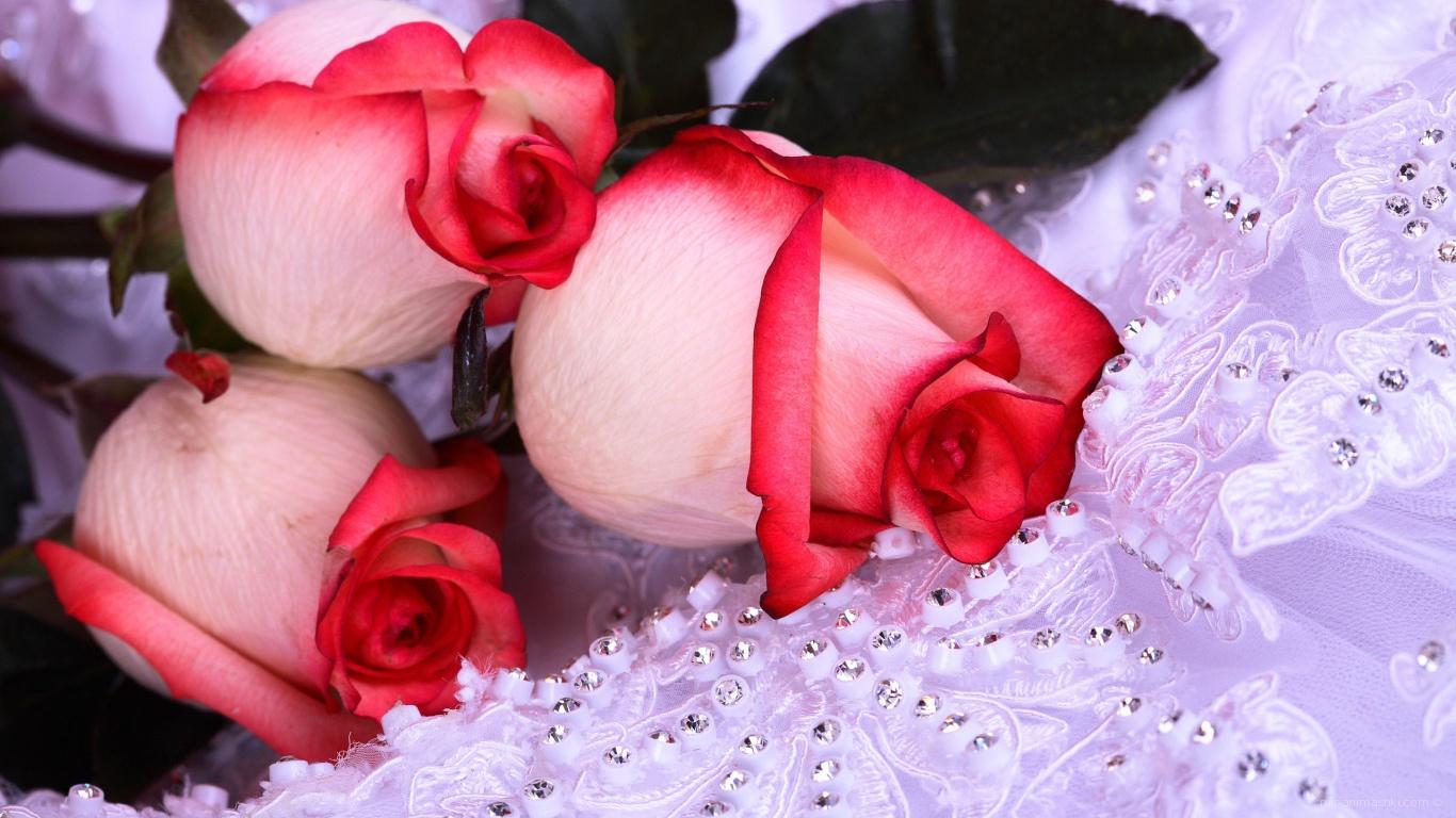 Розы на 8 марта - C 8 марта поздравительные картинки