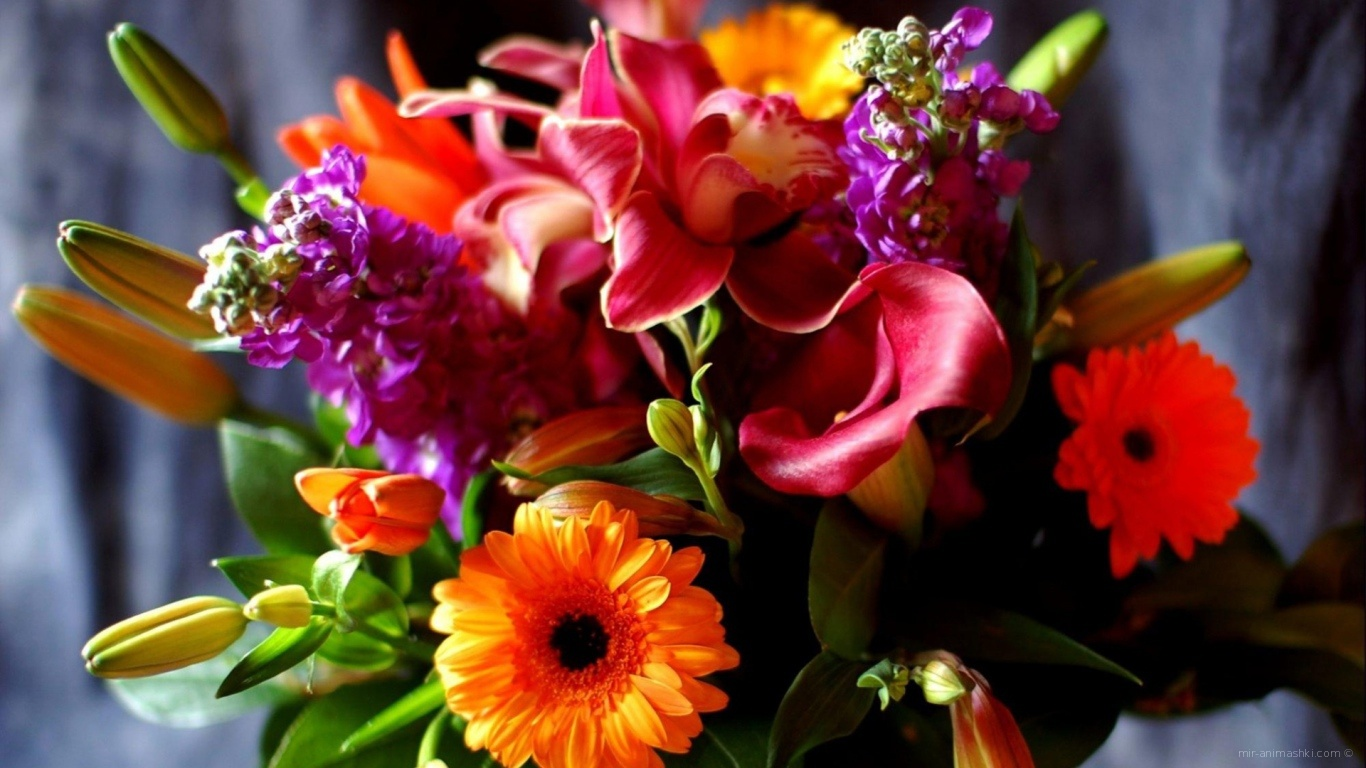Яркий букет для девушки на восьмое марта - C 8 марта поздравительные картинки