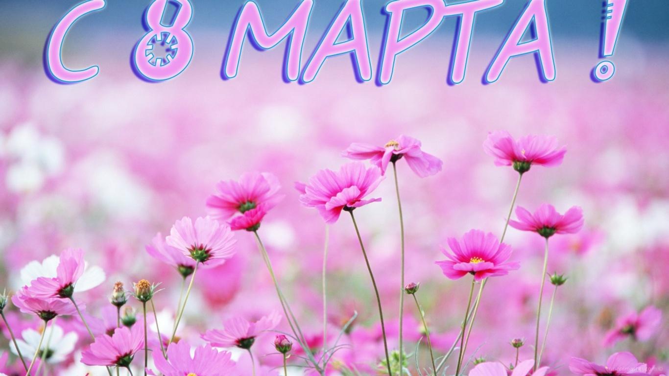 Луговые цветы на 8 марта - C 8 марта поздравительные картинки