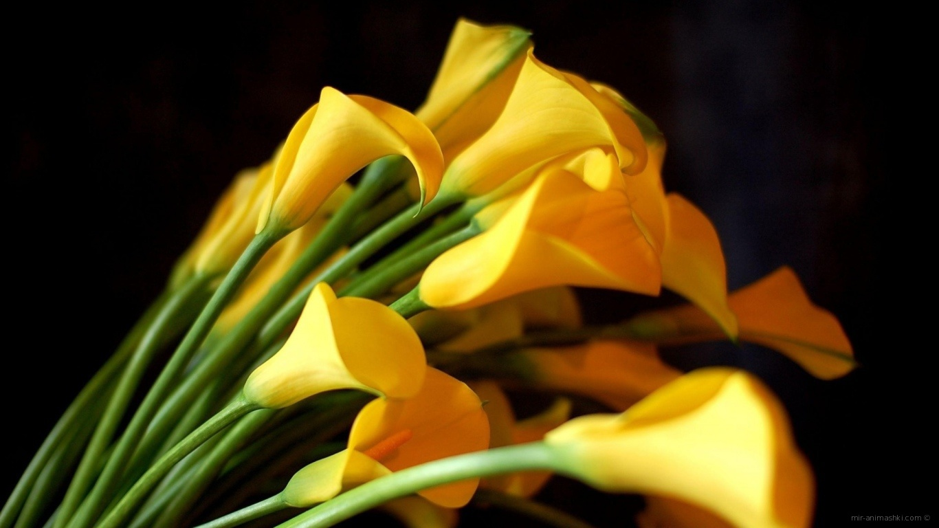 Black and yellow flower background