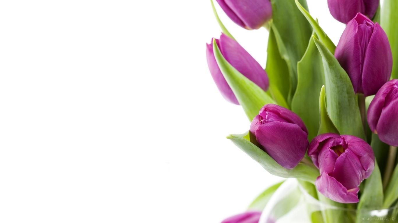 Нежные цветы на 8 марта - C 8 марта поздравительные картинки