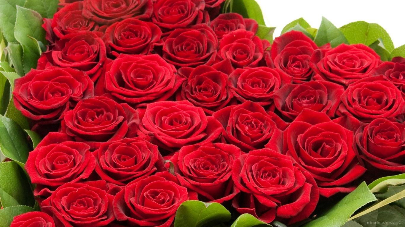 Букет красных роз на 8 марта для девушки - C 8 марта поздравительные картинки