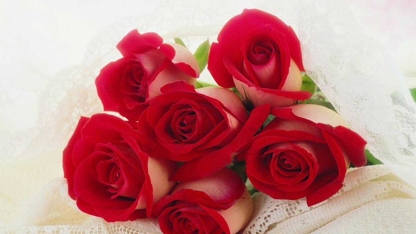 Красные розы на 8 марта для любимой - C 8 марта поздравительные картинки