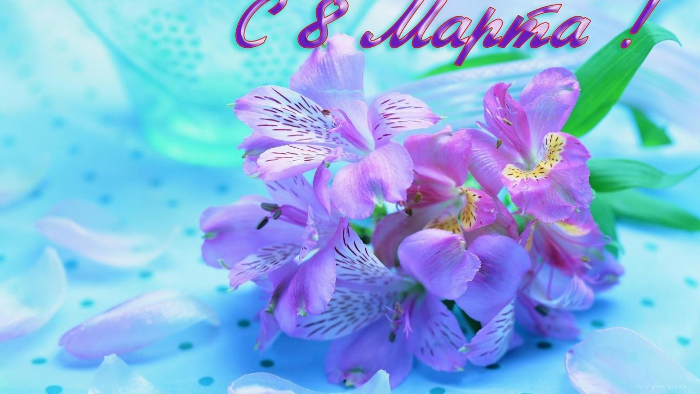 Сиреневые цветы на 8 марта - C 8 марта поздравительные картинки