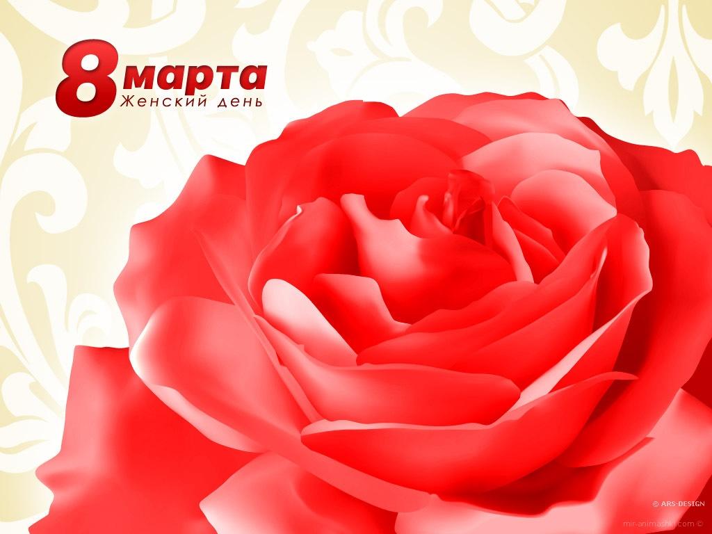 Великолепная роза на 8 марта - C 8 марта поздравительные картинки